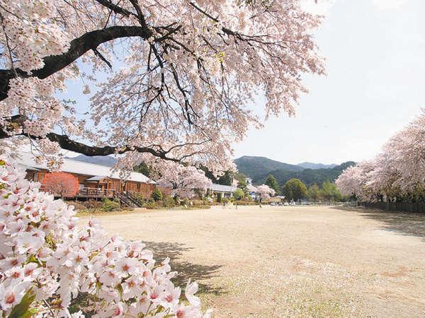 *当館のある三代校舎 桜のお花見にぴったり♪