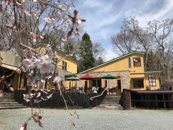 桜の季節到来!!4月下旬です。
