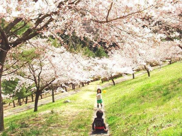 一面に広がる桜の木の下で遊ぶ子供たち(芝生広場)