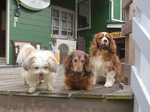 我が家のワンちゃん達です。左からハル、ボビー、チャロです。