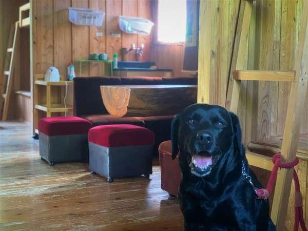 【ペット同宿可の専用コテージ】大切な愛犬と一緒に旅行♪/一例