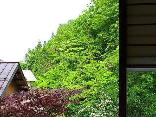 *和室からは新緑や紅葉、一面の銀世界など四季折々の景色が楽しめます。