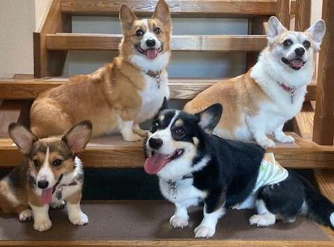 【愛犬と泊まる宿 ななつぼし】わんちゃんも飼い主さんも安心して寛げるアットホームな宿