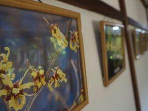 【館内】渡り廊下には常連のお客様による四季の大山や周囲に咲く花の写真を飾ってます