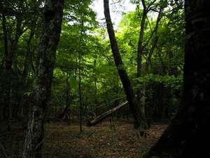 近くの林の中の景色。しっとりとした落ち着きがきれいだったので思わずパチリ!
