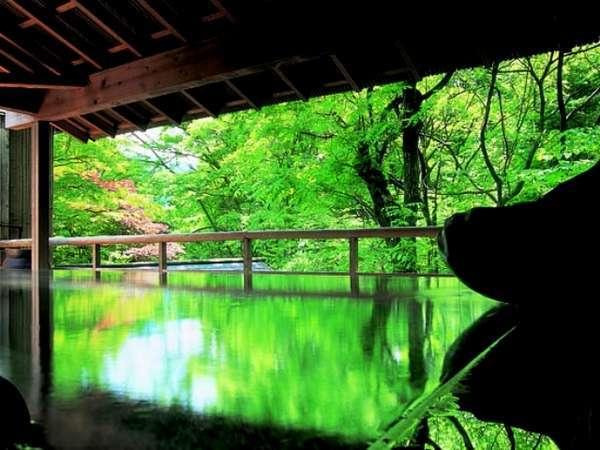 朝のみ解放される渓流沿いの野天風呂「紅葉」。自然いっぱいの中での早朝湯浴みをどうぞ