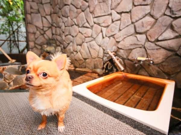 愛犬・愛猫と源泉かけ流し温泉に入れる♪