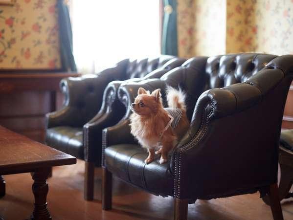 愛するわんちゃん&猫ちゃんとご一緒にお泊り頂けます