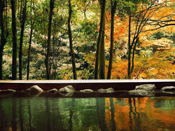 湯に映る紅葉が美しい「白鳥の湯」。ゆったり天然温泉に寛ぎながら紅葉狩り♪