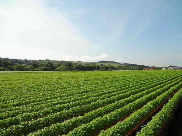 蕎麦畑とペンション