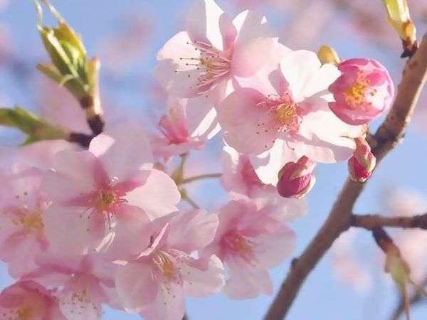 ■四千坪の庭園■四月上旬まで綺麗な春の花をお楽しみいただけます。