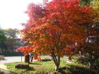自慢の当館庭の紅葉を眺めBBQも最高!(10/20~28日が見頃)