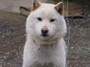 ワタシは、ここの看板犬【ひめ】(メス)です