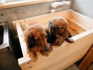 ペット専用のお風呂