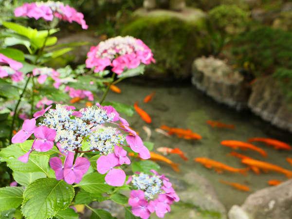敷地内庭園:6月は紫陽花が愉しめます。