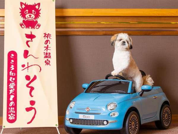 【写真撮影スポット】わんちゃんの決めポーズを是非ご撮影ください☆彡