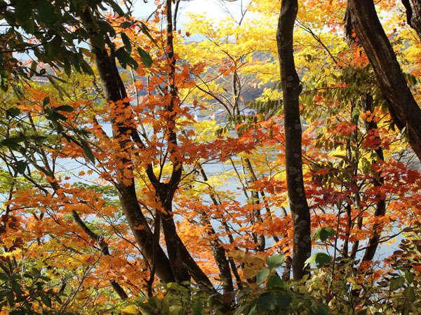 野尻湖畔の紅葉10月中旬から見頃です。