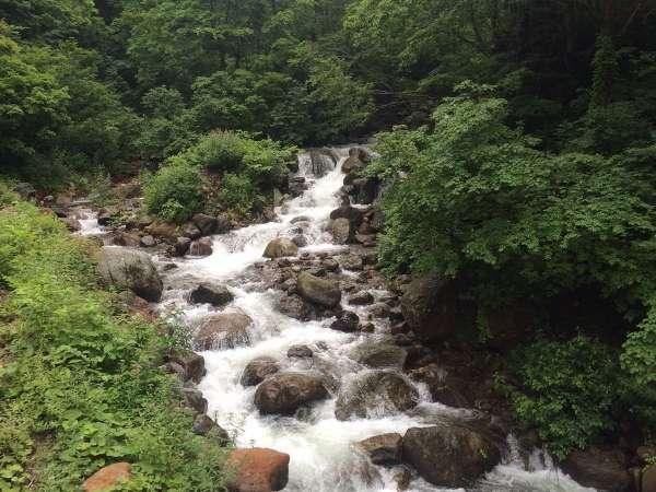 【部屋から眺める夏の景色】窓の外には涼やかな渓流と緑の美しさが広がる