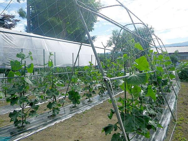 【リゾートイン村田】自家菜園の新鮮な味覚に舌鼓。四季に移ろう自然と温泉で癒しの時。