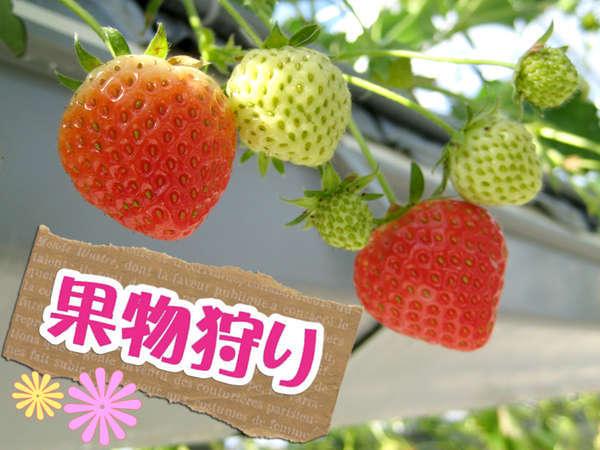 *1~6月いちご狩り体験!時間無制限♪3種の甘い大粒いちごを食べ比べ♪