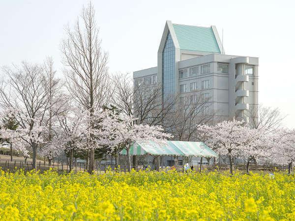 *【外観】桜と菜の花が綺麗な大潟村の春。皆様のお越しをお待ちしております。