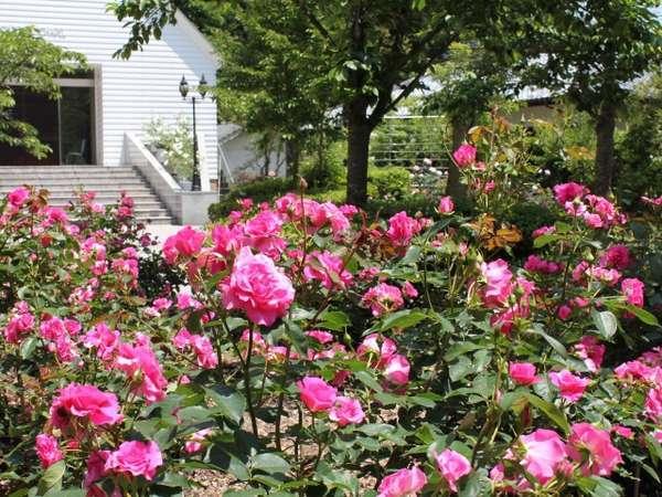 約70種450株の薔薇が楽しめるローズガーデン