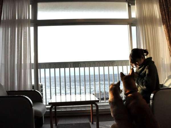 白浜 犬 御殿 犬御殿(ペットサロン・トリミング)|和歌山県西牟婁郡|EPARKペットライフ