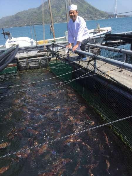 宿の前の海での養殖、蓄養筏
