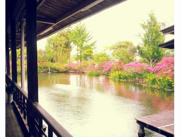 熊本県平成の名水百選の湧水池を眺めながらのお食事が楽しめます