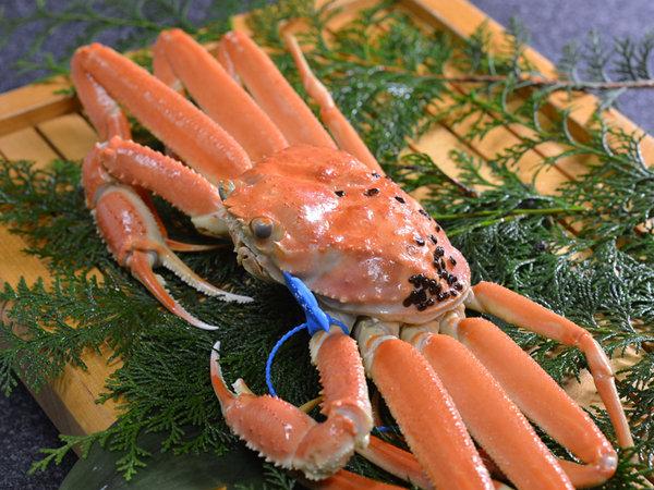 活け松葉蟹の茹で蟹