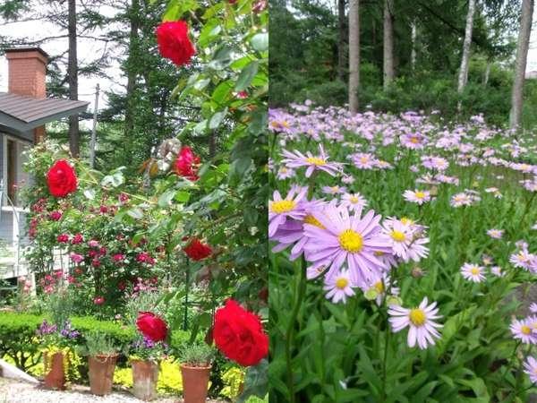 手入れの行き届いた庭も評判のひとつ。バラは6月中旬より、ヒメシオンは8月の庭を彩ります。