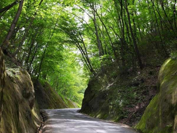 新緑の季節はこれが名物「緑のトンネル」