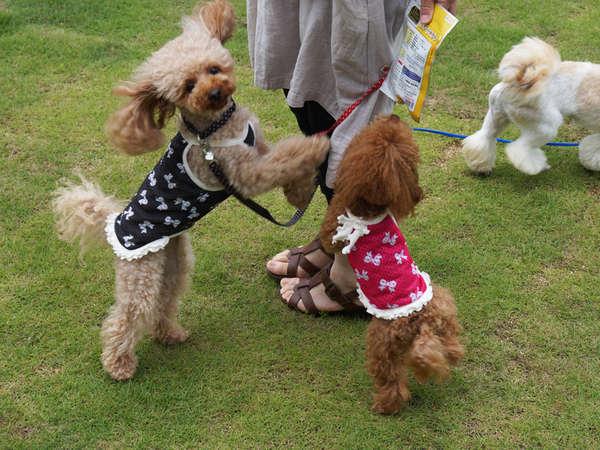 *【ドッグラン】ガーデンカフェで愛犬を眺めながら、過ごすこともできます。