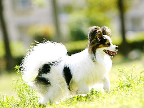 【ペットイメージ】愛犬と一緒に旅行へ行こう♪