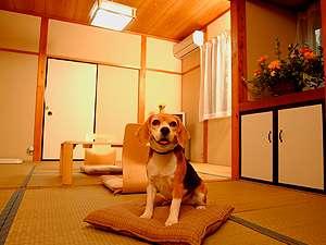 ペットと一緒にご宿泊いただけます。