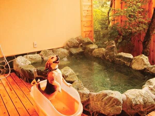 【ペット連れ専用の宿 アニマーレ】ペットと一緒に温泉浴!貸切露天と本格欧風ディナーを堪能できる宿