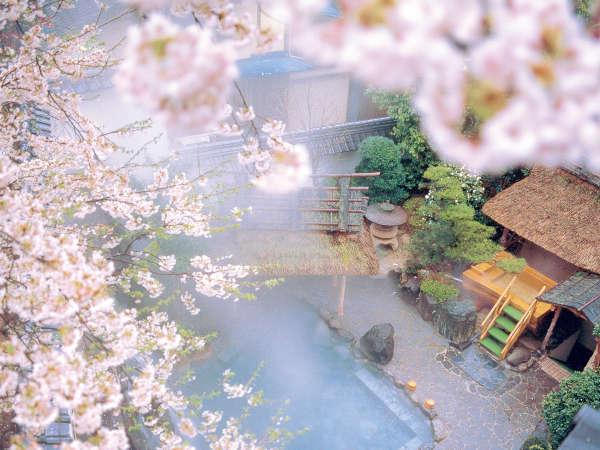 満開の桜の中で入る朝野家自慢の露天風呂-織姫