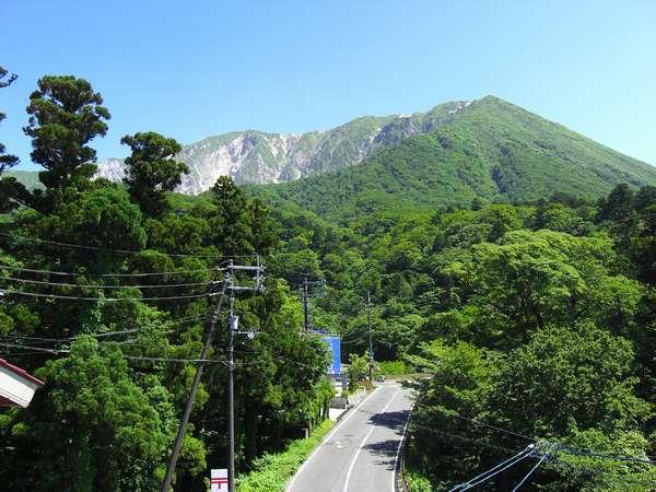 新緑の大山。清々しい緑が綺麗です!森林浴されませんか?