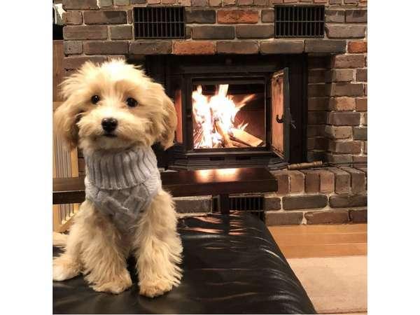 愛犬と一緒に宿泊♪