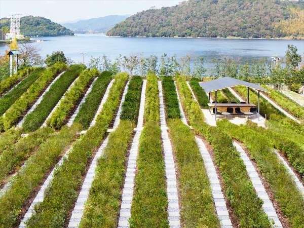 浜名湖畔に佇む「つむぎ茶畑」