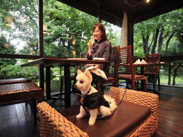 食事の際も常に愛犬と一緒にお愉しみ頂けます。
