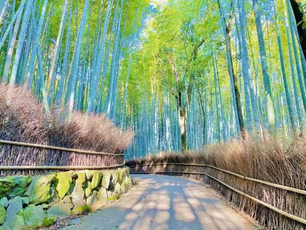 ◆竹林の小径~人気観光地・嵐山の観光名所~≪ホテルより車で5分≫