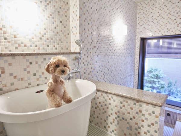 【貸切ペットバス】小型犬から大型犬まで利用可能(予約制/有料)