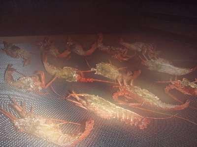 スモーカー内の伊勢海老燻煙風景です。これが伊勢海老プラン5品の一種になります。