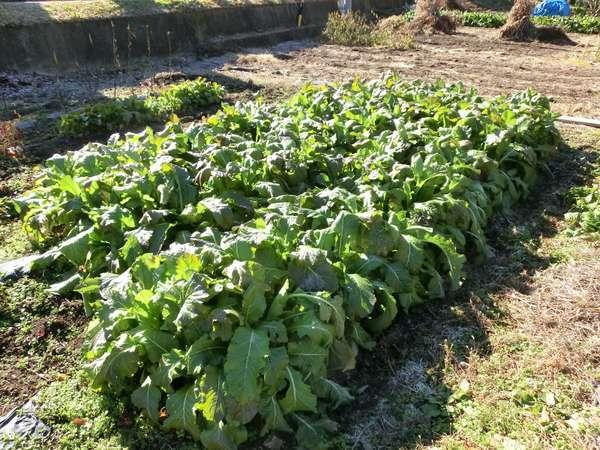 無農薬栽培の自家農園
