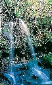 ジャングルの中にある裏見ヶ滝
