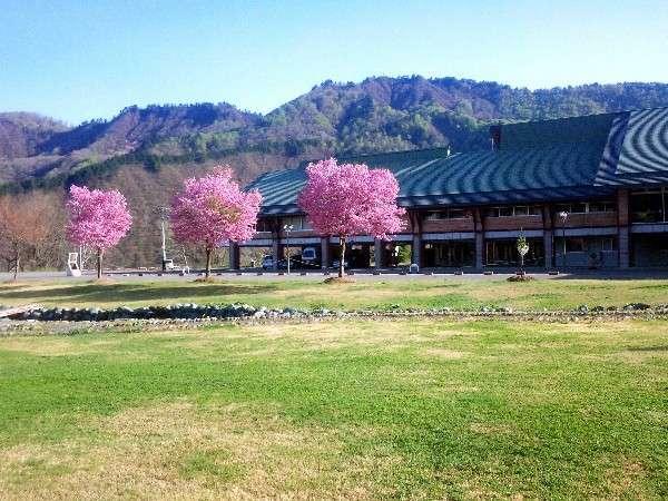 春の湯ら里 新緑の山々、そしてブナなどの芽吹き。前庭の桜はゴールデンウィークが見頃です。