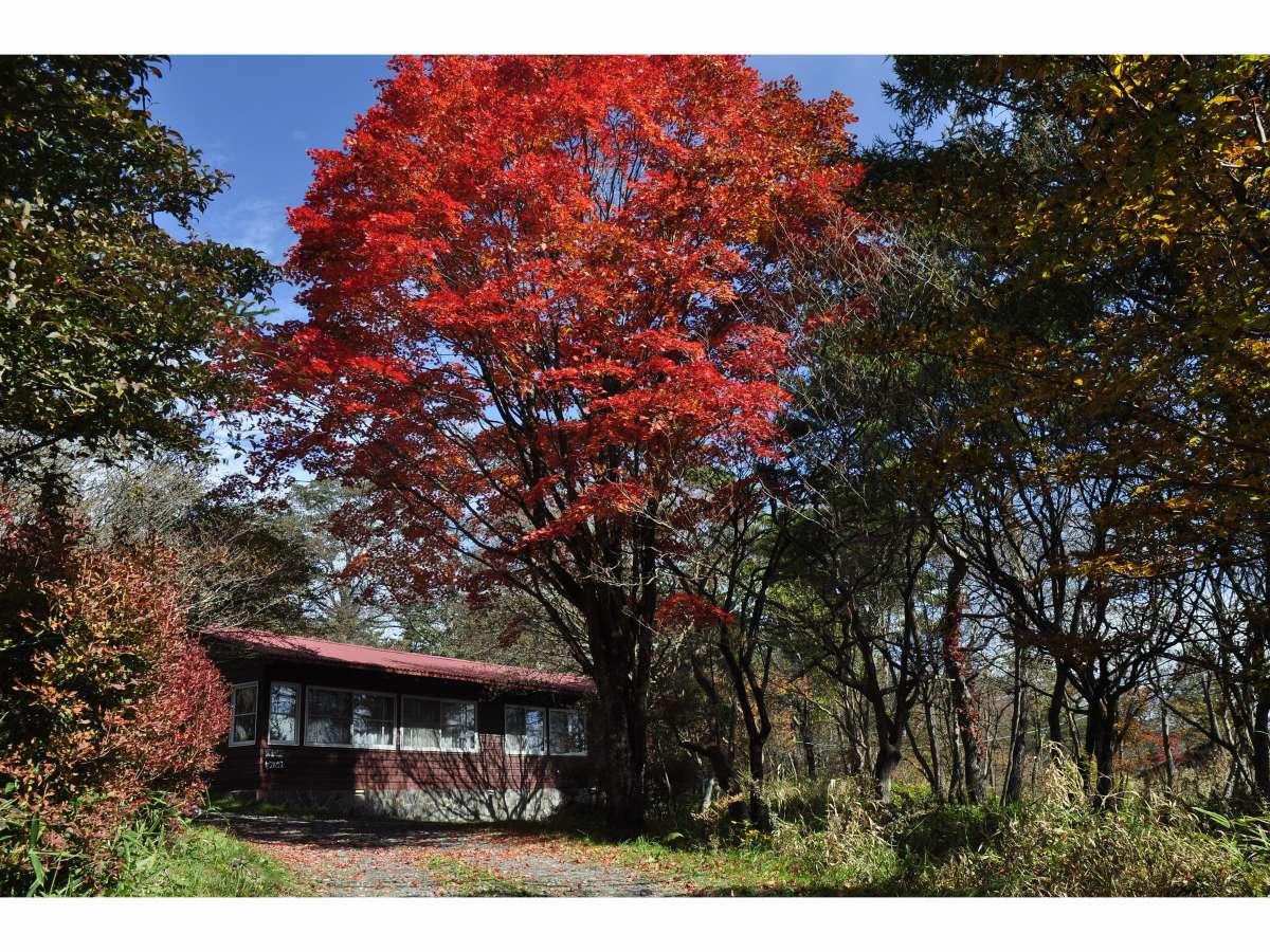 秋のコテージは窓から眺める紅葉も素敵です♪