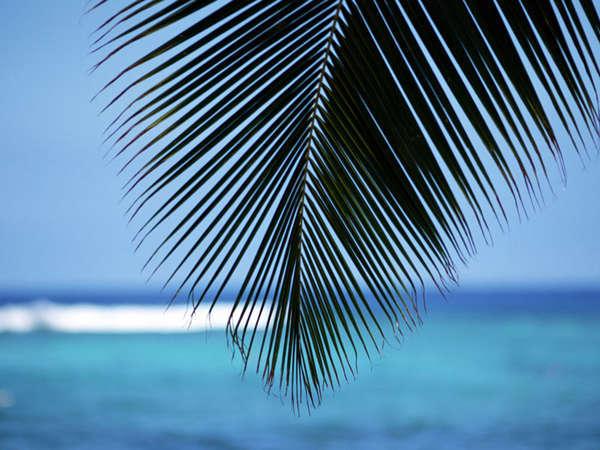 アクアブルーの海で南国気分を満喫しませんか?