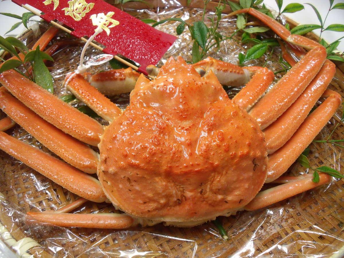 **活ズワイガニ 日本海 冬の味覚をどうぞ!**